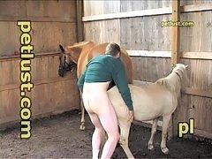 Miniature pony porn movies